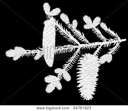 illustration with fir branch isolated on black background