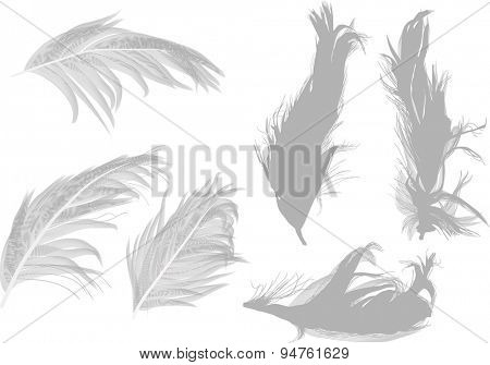 illustration with six grey feathers isolated on white background