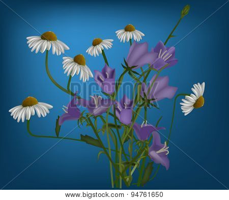 illustration with bunches of chamomiles and bellflowers on blue background