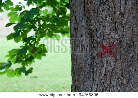 Tree marked with red paint