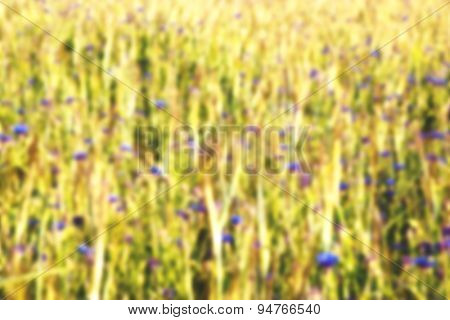 Abstract blurred view of summer field with flowers and grass
