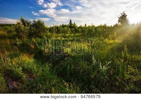 Green field under blue sky in sun light. Nature background