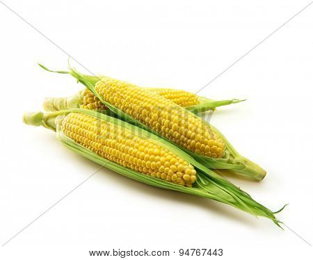 Fresh harvested corn with husks intact,  isolated on white. Focus is on middle corn.