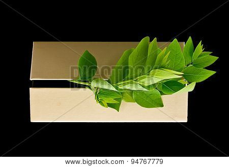 Environment Concept : Leaves Come Out From Boxes Isolated From Back Background.