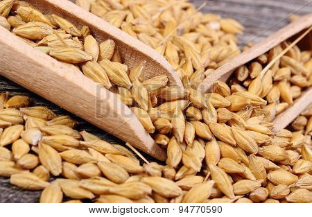 Barley Grain With Spoon On Wooden Background