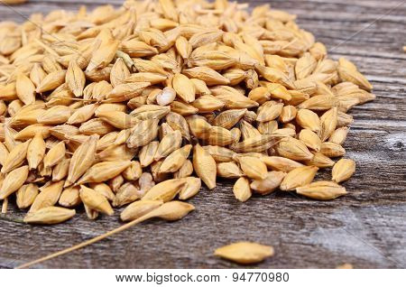Heap Of Barley Grain On Wooden Background