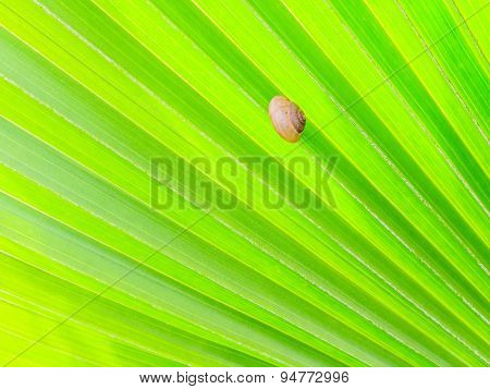 Shellfish On Green Palm Leaf