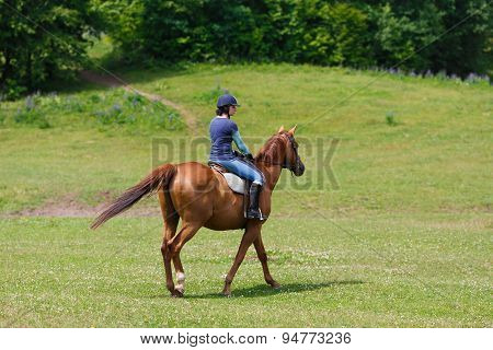 Horserider On The Meadow