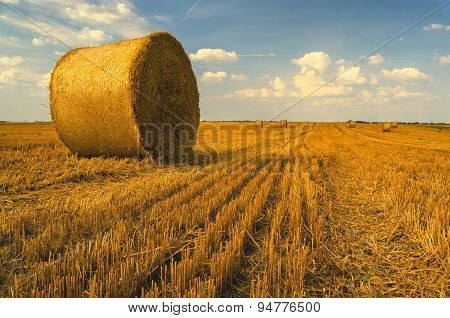 Hay Bales On The Agricultural Field in summer