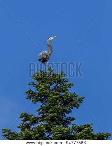 Heron Perched On Tree.
