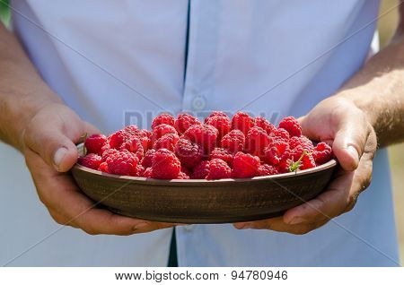 ripe raspberry in the hands of man
