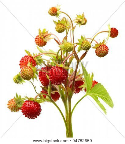Wild strawberry isolated on white background