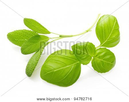 Basil and sage leaves spice closeup isolated on white background.