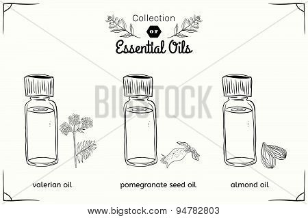 A set of essential oils in black and white style: Valerian, almonds, pomegranate seeds.