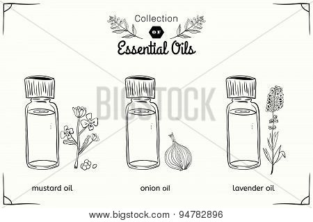 A set of essential oils in black and white style: mustard, onions, lavender.