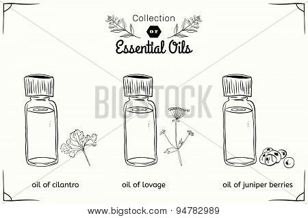A set of essential oils in black and white style: cilantro, lovage, juniper berries.