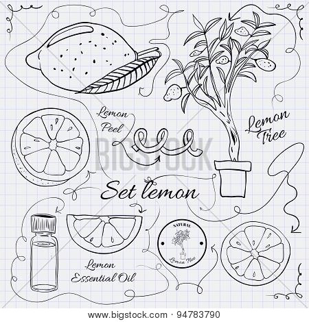 A large collection of stand-alone sketch lemons for design on a sheet of paper into the cage. illust