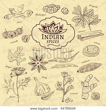 Set of spices and herbs cuisines of India on old paper in vintage style. Vector