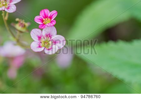 Small Courtyard Flowers