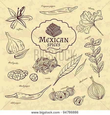 Set of spices and herbs cuisines of the world Latin America Mexico on old paper in vintage style. Ve