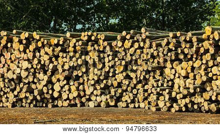 Pile Of Logs At The Port Ready For Loading To Ships