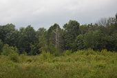 picture of pasture  - a lone dead tree in a grown pasture. ** Note: Soft Focus at 100%, best at smaller sizes - JPG