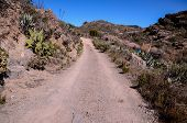 picture of dirt road  - Long Straight Dirt Desert Road disappears into the Horizon - JPG