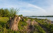 image of early morning  - Large willow trees have been cut down on the bank of a wide Dutch river - JPG
