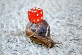 stock photo of snail-shell  - Chance in coming slow - JPG