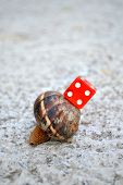 picture of snail-shell  - Chance in coming slow - JPG