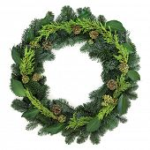 stock photo of blue spruce  - Winter wreath with ivy - JPG