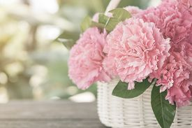 image of carnations  - Pink carnations in the basket with the morning light - JPG