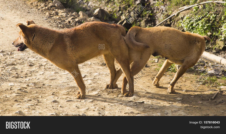 How Big Do Pet Prairie Dogs Get