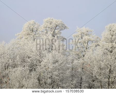 Nature In Winter