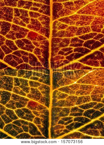 Two autumn leaf texture, which look like lava. The photos were taken by two lenses as the one lens and stacked into the one clear photo.