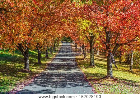 Vibrant Autumn colors on this row of trees ling a driveway in Morris County NJ.