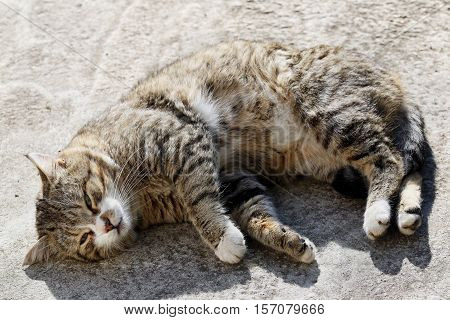 Big fluffy homeless cat with long whiskers sleeping outdoor.