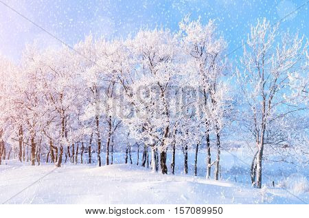 Winter landscape with falling snow- winter wonderland with winter snowfall and sunlight over winter landscape. Snowy winter landscape in the winter forest-winter scene with Christmas and New Year mood