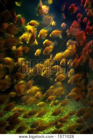 Color Fish