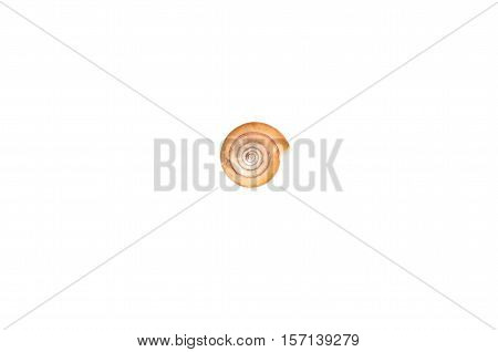 Shell Isolated On white background.Shell Isolated On white background