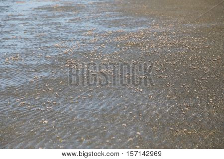 many of red crab on beach in the sea when water down