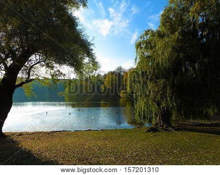 park with lake and willow trees in contre jour sun
