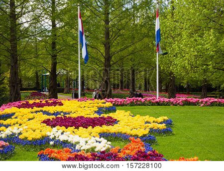 Flower bed of colourful tulips in spring. Colorful tulips in the Keukenhof garden, Holland Netherlands. Fresh blooming tulips in the spring garden. Tulip Flower Field.