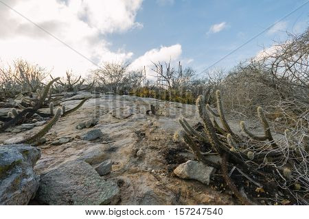 Landscape Of The Caatinga In Brazil