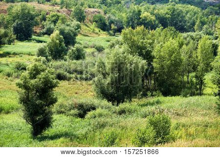 hilly scenic landscape tree and wild grasses