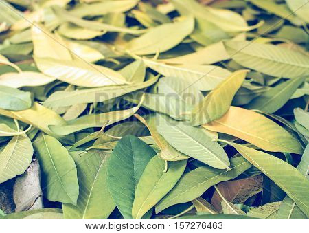 abstract, artificial, autumn, background, beautiful, beauty, bright, clean, closeup, color, day, design, drop, environment, foliage, forest, fresh, garden, grass, green, leaf, light, many, natural, nature, organic, pattern, plant, seamless, season, small,