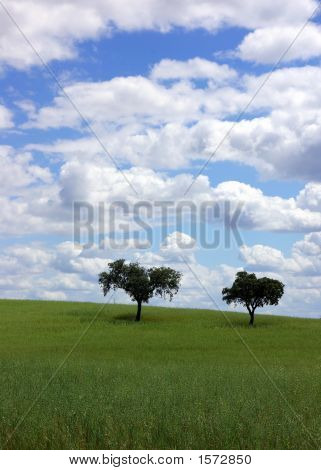 Plain Of The Alentejo
