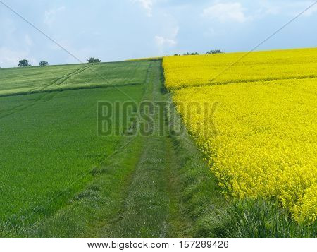 Here you can see the contrast of different cultivation areas.