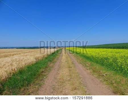 This is a way along the barley and rape field.