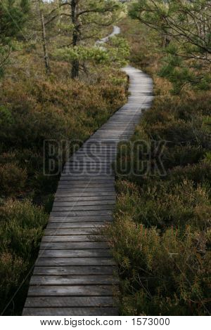 Wooden Walkaway Leading Into The Swamp